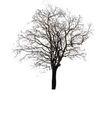 四季阔叶树0264,四季阔叶树,植物,