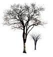 四季阔叶树0265,四季阔叶树,植物,