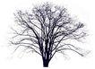 四季阔叶树0266,四季阔叶树,植物,