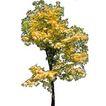 四季阔叶树0268,四季阔叶树,植物,