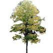 四季阔叶树0270,四季阔叶树,植物,