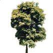 四季阔叶树0272,四季阔叶树,植物,
