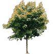 四季阔叶树0274,四季阔叶树,植物,