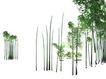 竹0001,竹,植物,