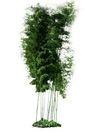 竹0002,竹,植物,