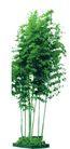竹0004,竹,植物,