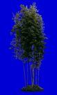 竹0005,竹,植物,