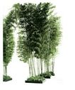 竹0007,竹,植物,