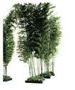 竹0008,竹,植物,