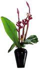 室内植物0115,室内植物,植物,