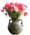 室内植物0122,室内植物,植物,
