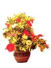 室内植物0123,室内植物,植物,