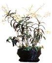室内植物0124,室内植物,植物,