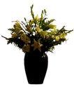 室内植物0127,室内植物,植物,