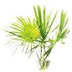 室内植物0129,室内植物,植物,