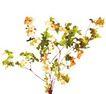 室内植物0130,室内植物,植物,