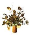 室内植物0134,室内植物,植物,