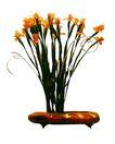 室内植物0144,室内植物,植物,