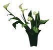 室内植物0145,室内植物,植物,