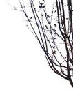 室外植物0057,室外植物,植物,