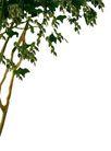 室外植物0059,室外植物,植物,