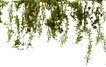 室外植物0080,室外植物,植物,