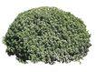 室外植物0084,室外植物,植物,