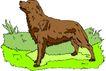 珍稀动物1017,珍稀动物,动物,