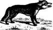 珍稀动物1019,珍稀动物,动物,