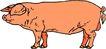 珍稀动物1024,珍稀动物,动物,