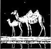 珍稀动物1053,珍稀动物,动物,