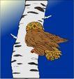 鸟的天堂0965,鸟的天堂,动物,