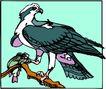 鸟的天堂0968,鸟的天堂,动物,