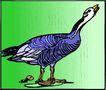 鸟的天堂0972,鸟的天堂,动物,