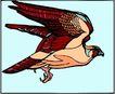鸟的天堂0973,鸟的天堂,动物,