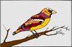 鸟的天堂0975,鸟的天堂,动物,