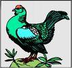 鸟的天堂0979,鸟的天堂,动物,