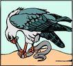 鸟的天堂0980,鸟的天堂,动物,
