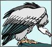 鸟的天堂0988,鸟的天堂,动物,
