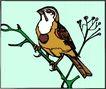 鸟的天堂0991,鸟的天堂,动物,