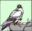 鸟的天堂0992,鸟的天堂,动物,