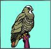 鸟的天堂0993,鸟的天堂,动物,