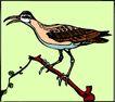 鸟的天堂0994,鸟的天堂,动物,