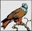 鸟的天堂0995,鸟的天堂,动物,