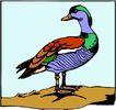 鸟的天堂0999,鸟的天堂,动物,