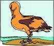 鸟的天堂1000,鸟的天堂,动物,