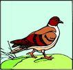 鸟的天堂1001,鸟的天堂,动物,