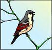 鸟的天堂1002,鸟的天堂,动物,