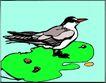鸟的天堂1006,鸟的天堂,动物,