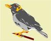 鸟的天堂1015,鸟的天堂,动物,